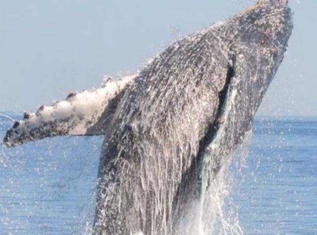 Whale joy