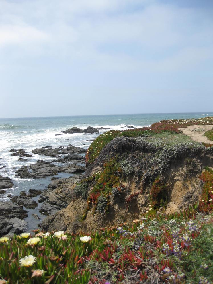 Ice flowers and rock Pools,  Pigeon Point, CA April 28, 2013