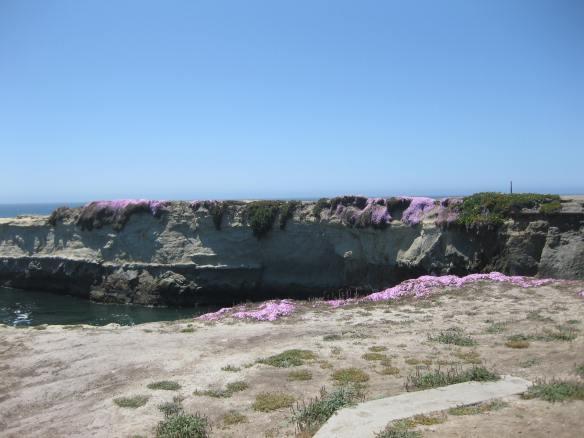 Lighthouse Beach Ice Flowers, Santa Cruz, CA April 29, 2013