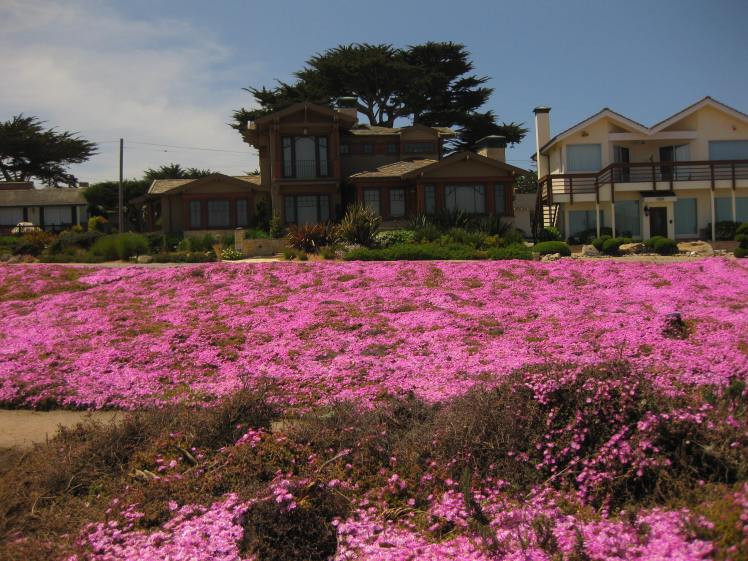 People actually live here! Lover's Point - Pacific Grove, CA April 30, 2013