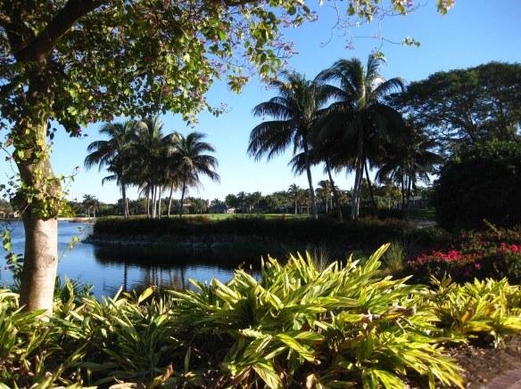 Palms Thriving