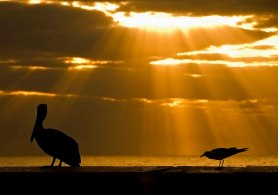 birds-at-sunrise